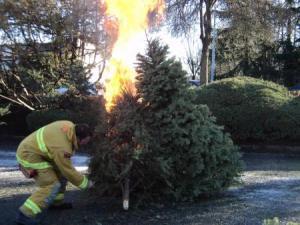 Christmas, Xmas, Christmas tree, new year, christmas tree disposl